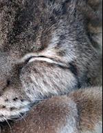 Lynx Notebook