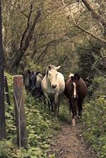 Three Lovely Horses in the Forest Journal