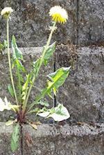 Journal Sunny Dandelion Stone Wall