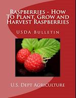 Raspberries - How to Plant, Grow and Harvest Raspberries