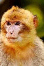 Barbary Ape Endangered Species Notebook