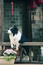 Contemplating Border Collie Notebook