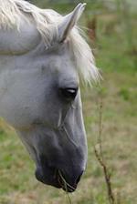Beautiful White Horse Notebook
