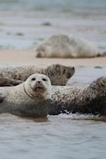Gray Seals Notebook