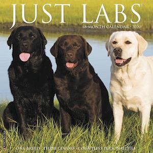 Just Labs 2020 Wall Calendar (Dog Breed Calendar)