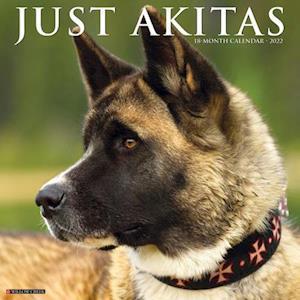 Just Akitas 2022 Wall Calendar (Dog Breed)