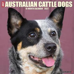 Just Australian Cattle Dogs 2022 Wall Calendar (Dog Breed)