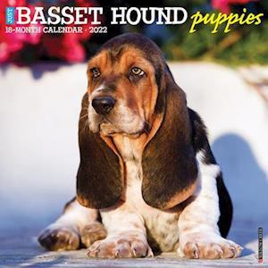 Just Basset Hound Puppies 2022 Wall Calendar (Dog Breed)