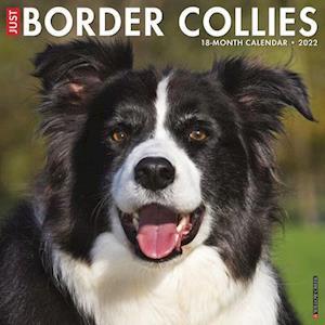 Just Border Collies 2022 Wall Calendar (Dog Breed)