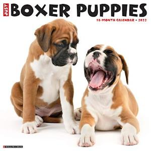 Just Boxer Puppies 2022 Wall Calendar (Dog Breed)