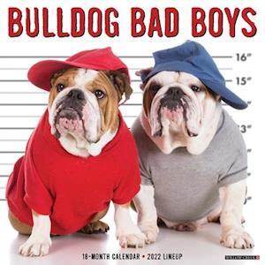 Bulldog Bad Boys 2022 Wall Calendar (Dog Breed)