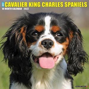Just Cavalier King Charles Spaniels 2022 Wall Calendar (Dog Breed)