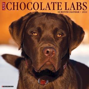 Just Chocolate Labs 2022 Wall Calendar (Labrador Retriever Dog Breed)