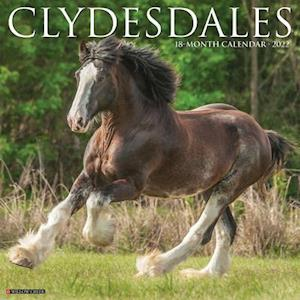 Clydesdales 2022 Wall Calendar (Horses)