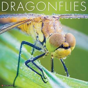 Dragonflies 2022 Wall Calendar