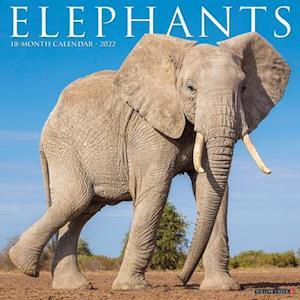 Elephants 2022 Wall Calendar