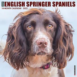 Just English Springer Spaniels 2022 Wall Calendar (Dog Breed)
