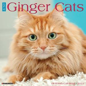 Just Ginger Cats 2022 Wall Calendar (Cat Breed)