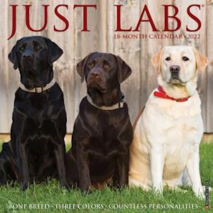 Just Labs 2022 Wall Calendar (Labrador Retriever Dog Breed)