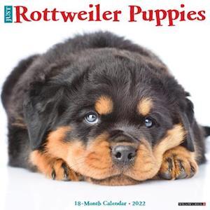 Just Rottweiler Puppies 2022 Wall Calendar (Dog Breed)