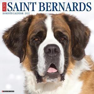 Just Saint Bernards 2022 Wall Calendar (Dog Breed)