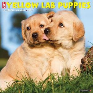 Just Yellow Lab Puppies 2022 Wall Calendar (Dog Breed)