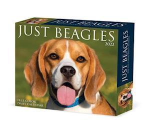 Beagles 2022 Box Calendar - Dog Breed Daily Desktop