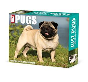 Pugs 2022 Box Calendar - Dog Breed Daily Desktop