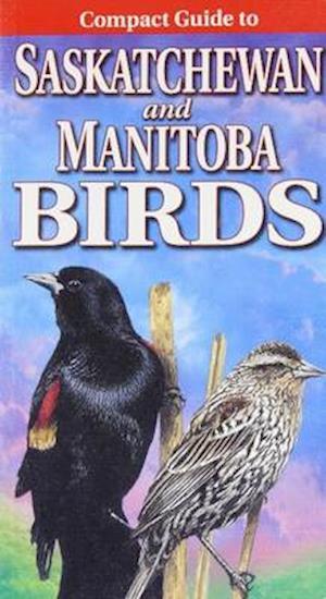 Bog, paperback Compact Guide to Saskatchewan and Manitoba Birds af Krista Kagume