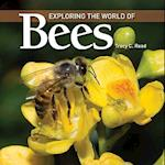 Exploring the World of Bees