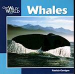 Whales (Our Wild World)