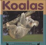 Koalas af Denise Burt