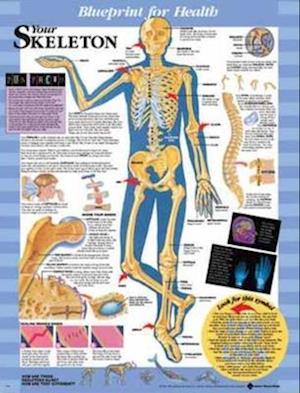 Blueprint for Health Your Skeleton Chart