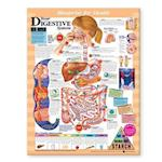 Blueprint for Health Your Digestive System Chart (Blueprint for Health)