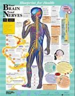 Blueprint for Health Your Brain and Nerves Chart (Blueprint for Health)