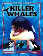 Killer Whales (Boys Rock!)