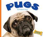 Pugs (Domestic Dogs)