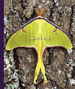 Moths (WORLD OF INSECTS)