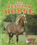 The Belgian Horse (Horse Breed Roundup)