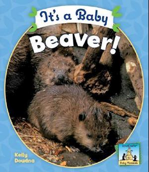 It's a Baby Beaver!