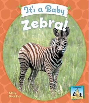 It's a Baby Zebra!