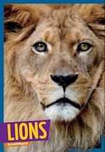 Lions (Wildc.A.T.S)
