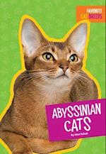 Abyssinian Cats (Favorite Cat Breeds)