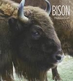 Bison af Melissa Gish