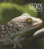 Geckos (Living Wild)