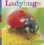 Ladybugs (Seedlings)