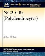 Ng2-Glia (Polydendrocytes)
