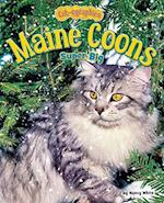Maine Coons (Cat-ographies)