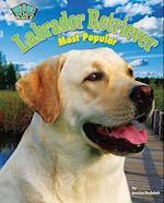 Labrador Retriever af Jessica Rudolph