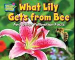 What Lily Gets from Bee (Science Slam: Plant-ology)